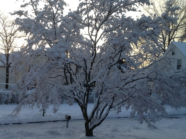Free Images to Download for a Website of Winter 2013 in NJ